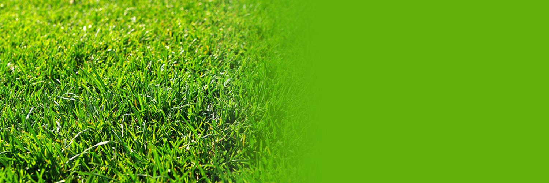 松山物産 事業一覧 芝草とケイ酸