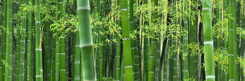松山物産 竹資源利用活用
